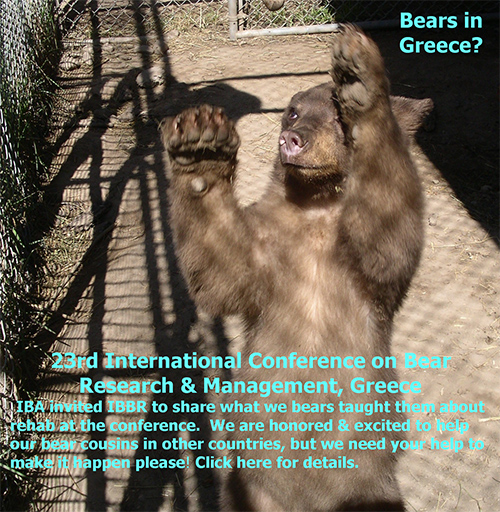 Bears in Greece?